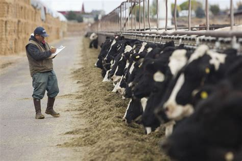Dairy Industry Faces Environmental Challenges | Southern
