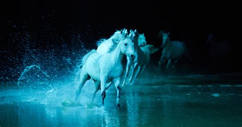 Cavalia's 'Odysseo' Horse Show Brings Out the 10-Year-Old
