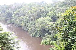 Tropical and subtropical moist broadleaf forests - Wikipedia