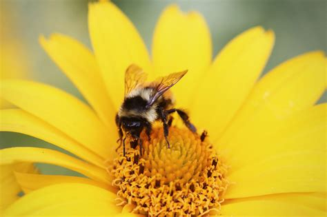 5 Simple Ways To Help Bees - The English Garden