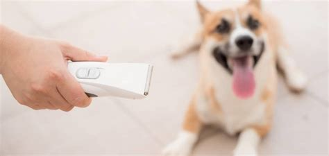 Best Quiet Dog Clippers of 2020: Top 3 Recommendations