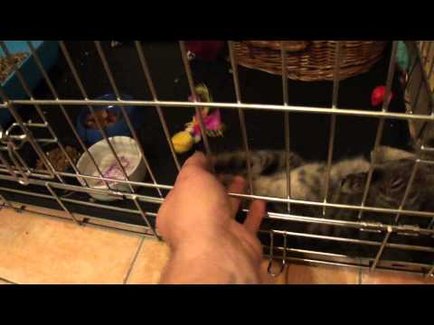 Chat poil long a adopter sous poil chat