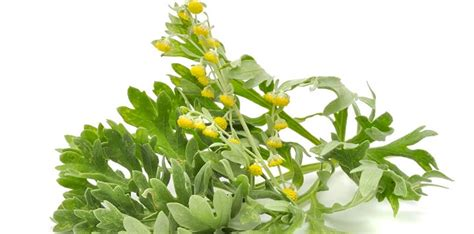 Five Great Herbs for Cancer Patients - CancerLiving