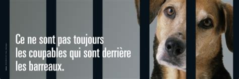Planetoscope - Statistiques : Abandons d'animaux