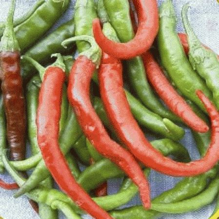 Hot Pepper Seeds - 'Cayenne Long Red - Thin'